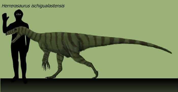 Descripción del Herrerasaurus