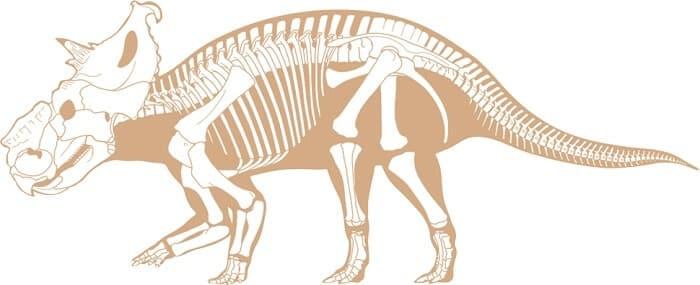 Descripción del Pachyrhinosaurus
