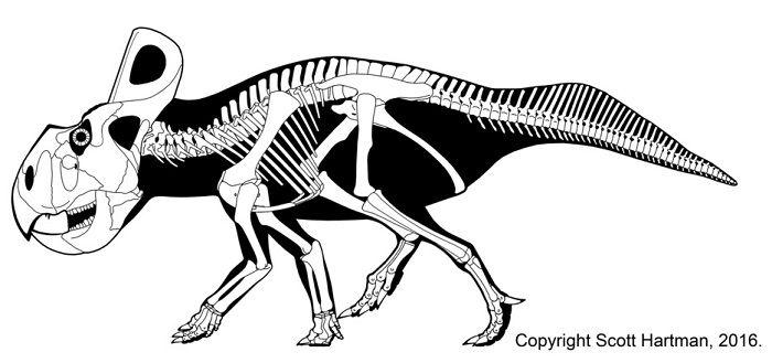 Esqueleto de un Protoceratops