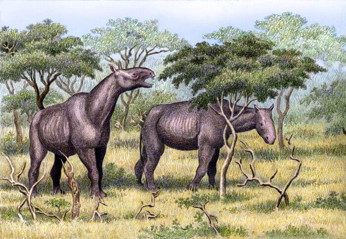 Posibles causas de la extinción del Paraceratherium