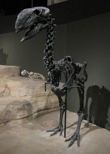 gastornis - esqueleto completo