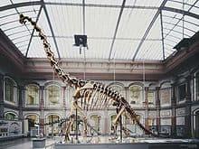 giraffatitan en el museo de berlin