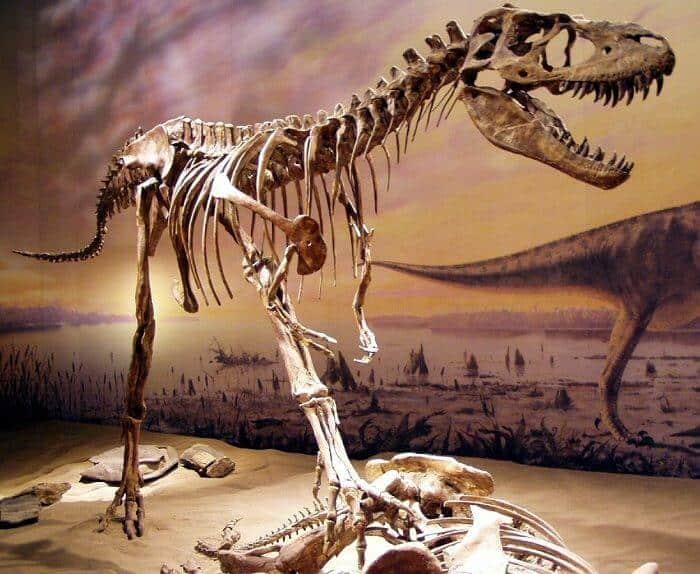 Descubrimiento del Gorgosaurus