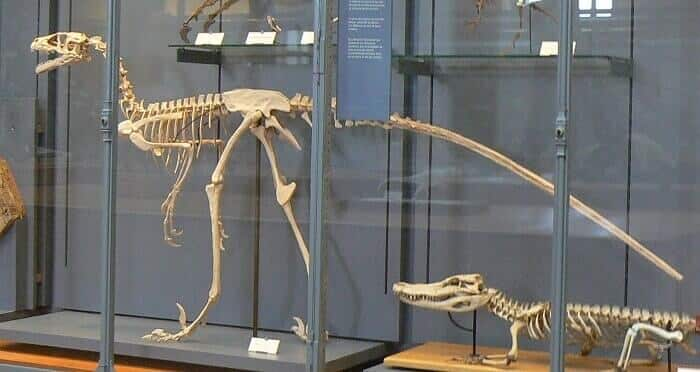 Reeconstrucción de un Dromaeosaurus