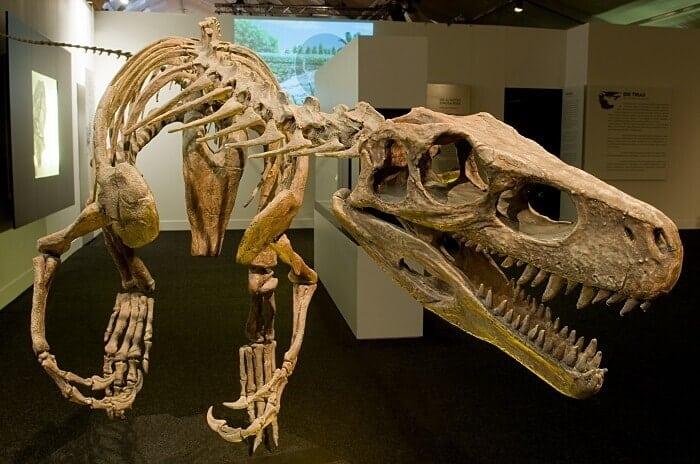 Reconstrucción de un Herrerasaurus