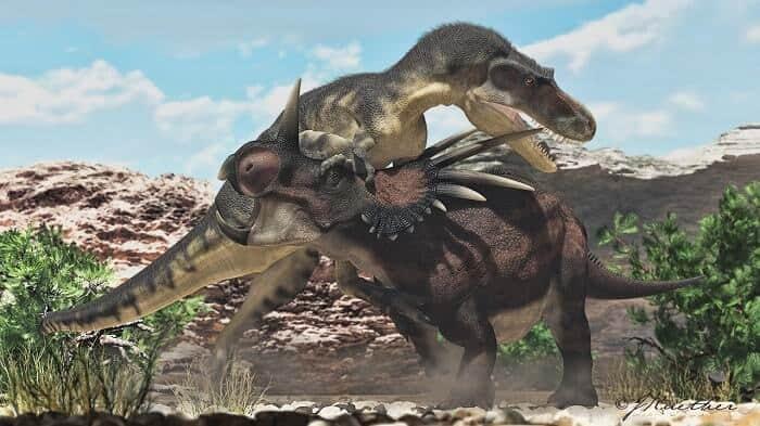 styracosaurus-vs-gorgosaurus