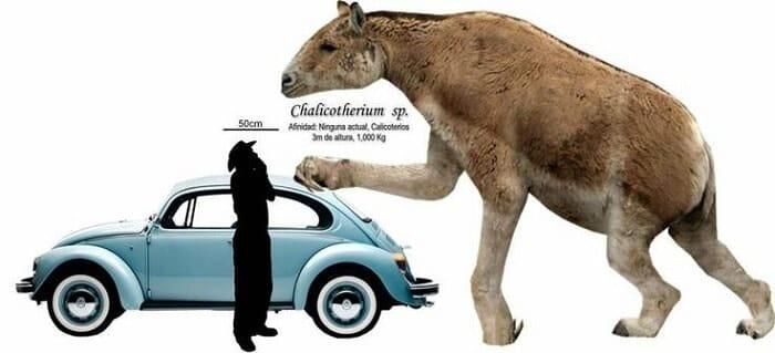 Descripción del Chalicotherium