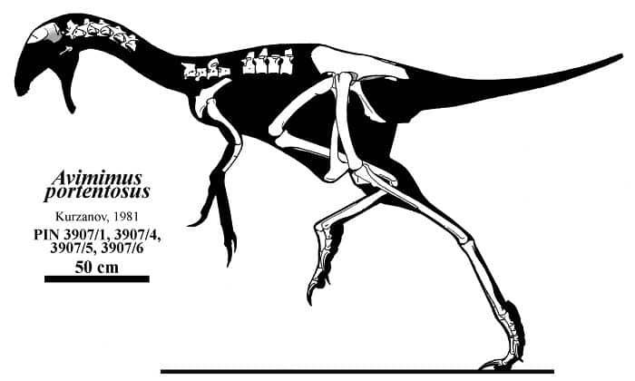 Descripción del Avimimus