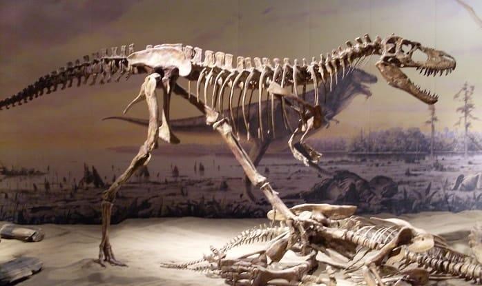 Exposición del Albertosaurus en el Museo Royal Tyrrell