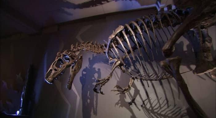 Exposición Allosaurus en el Museo de Suiza