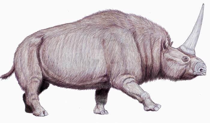 Descripción del Elasmotherium
