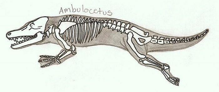 Descripción sobre Ambulocetus