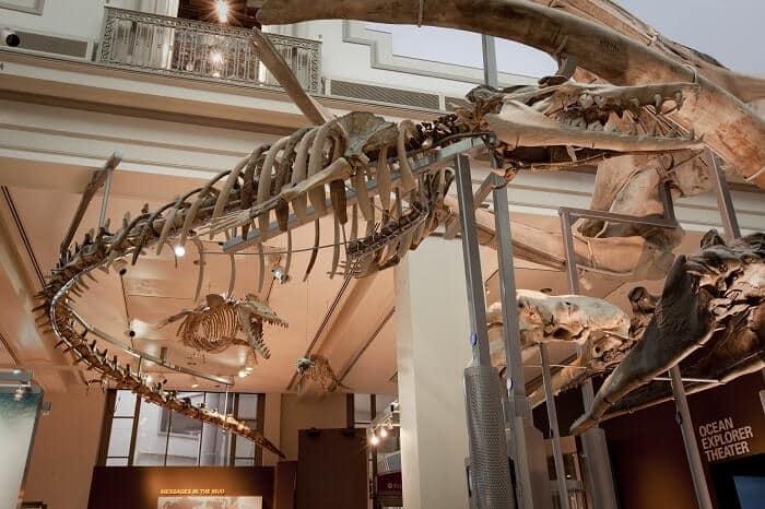 Reconstrucción de Basilosaurus