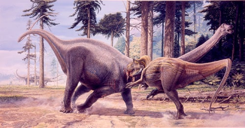 Diplodocus vs Allosaurus