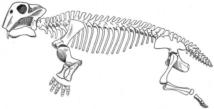 Descripción sobre Lystrosaurus