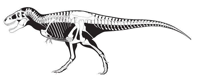 Descripción del Tyrannosaurus Rex