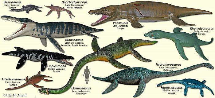 La familia de los plesiosaurios