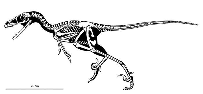 Tamaño del Bambiraptor