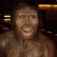 lucy – australopithecus