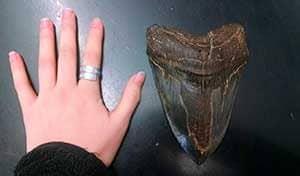 diente de megalodon