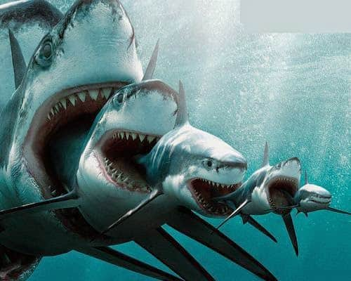evolucion del tiburon
