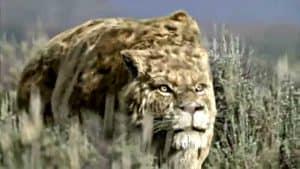 smilodon cazando