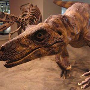 Herrerasaurus – dinosaurio carnívoro