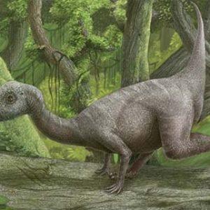 Hypsilophodon – dinosaurio herbivoro