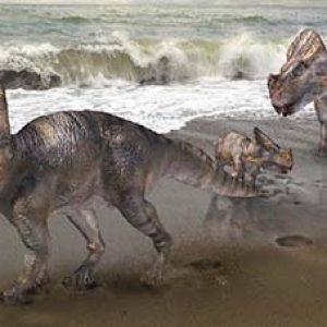 Montanoceratops – dinosaurio herbivoro
