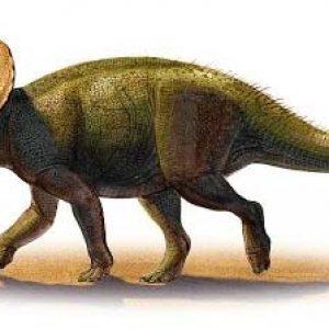 Turanoceratops  – dinosaurio herbívoro