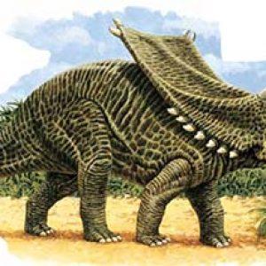 chasmosaurus – dinosaurio herbivoro