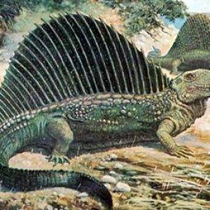 dimetrodon – dinosaurio carnívoro