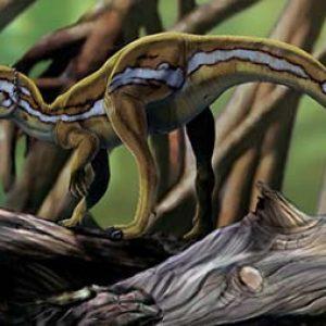 micropachicefalosaurus – dinosaurio herbivoro