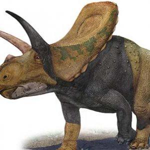 torosaurus – dinosaurio herbivoro