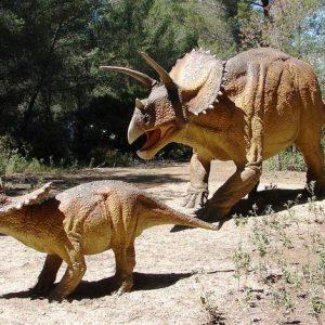 triceratops y familia